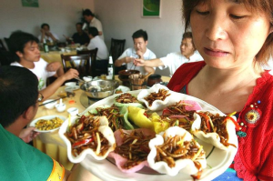 Insects --- High-Powered Snacks For Tourists